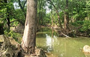 Texas Riparian & Stream Ecosystem Training – Big Elm Creek Watershed