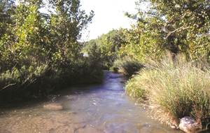 Texas Riparian & Stream Ecosystem Training - Petronila and San Fernando Creek Watersheds