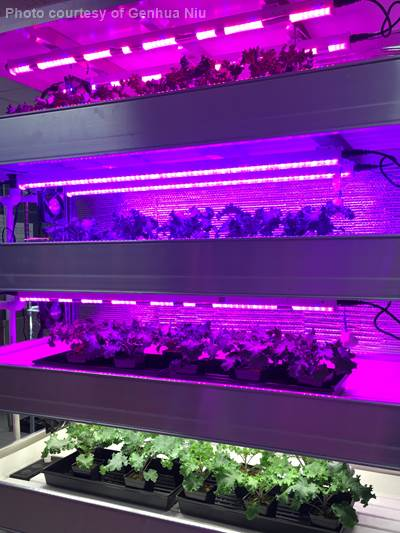 Vertical farming using LED lights for leafy greens.
