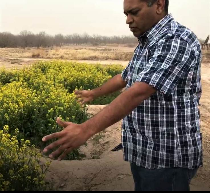 Dr. Girisha Ganjegunte works in El Paso on identifying salt-tolerant crops that require less water.